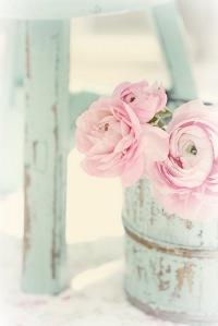 flowers---